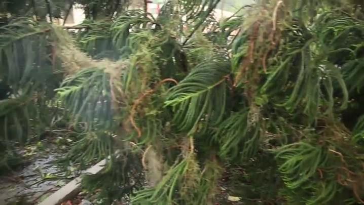 Queda de árvore deixa estudantes sem aulas em bairro de Florianópolis