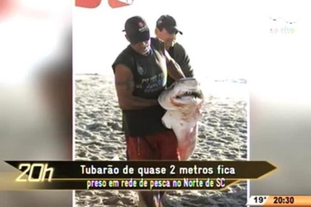 TVCOM 20 Horas - Tubarão de quase 2 metros fica preso em rede de pesca no Norte de SC - 11.06.15