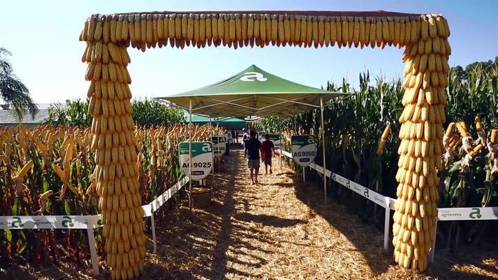 Um tour pela maior feira do Brasil voltada à agricultura familiar