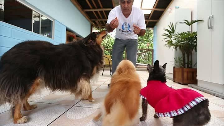 Dicas de como adestrar seu animalzinho de estimação