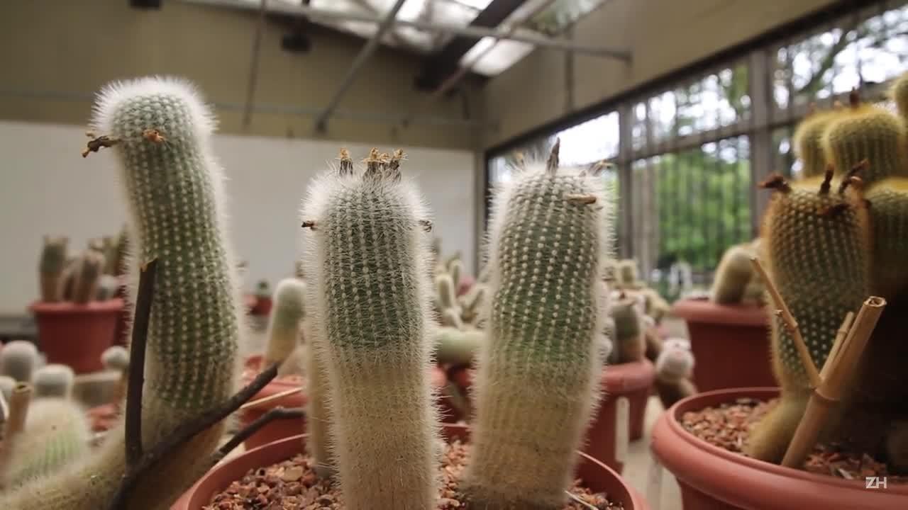 Três tesouros do Jardim Botânico